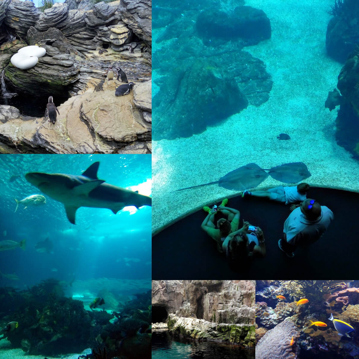collage of acquarium in lisbon