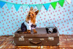Διακοπές στη Ρώμη με το σκύλο μου; Γίνεται!