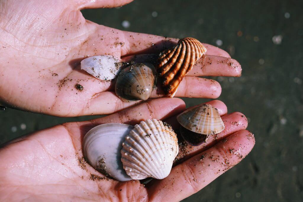 shells anzio beach