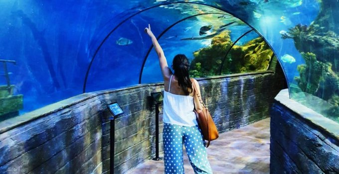 Malta National Aquarium: tips, opening hours and tickets
