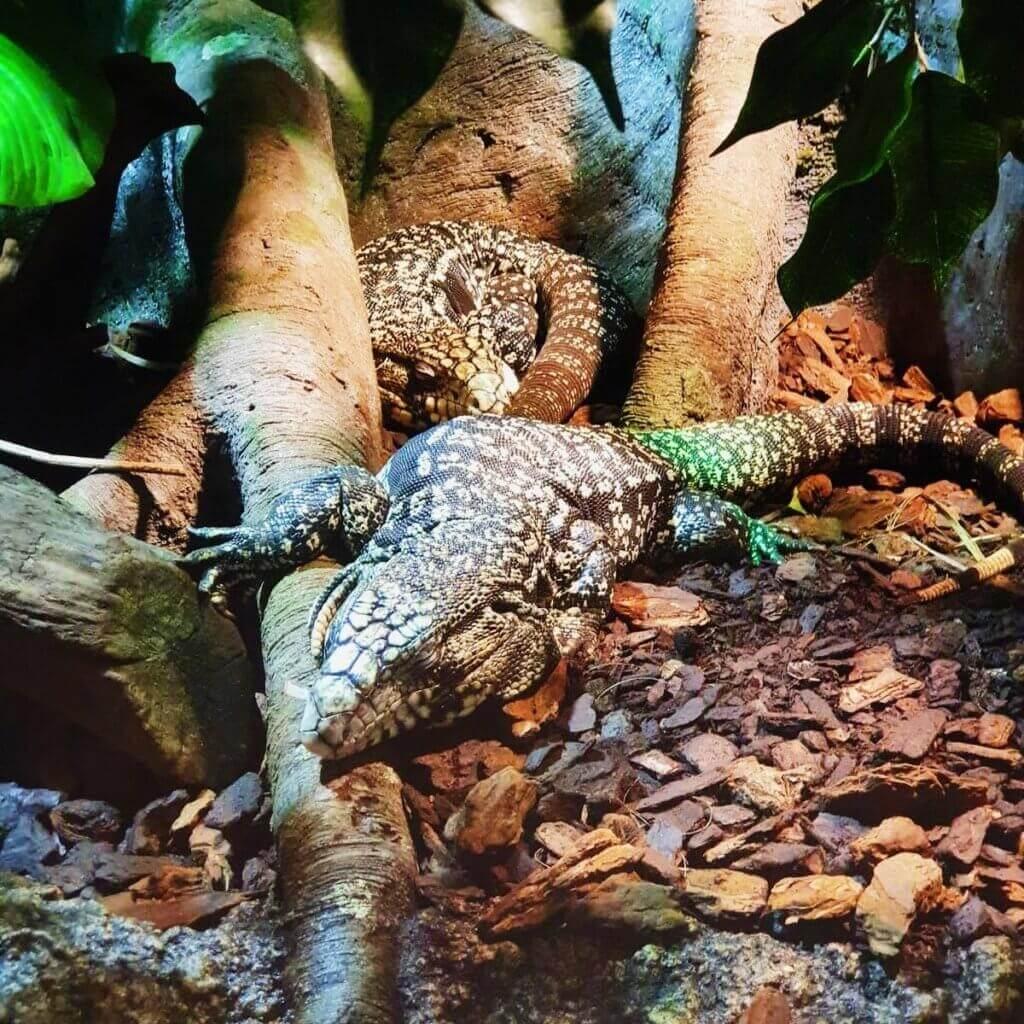 reptile malta aquarium