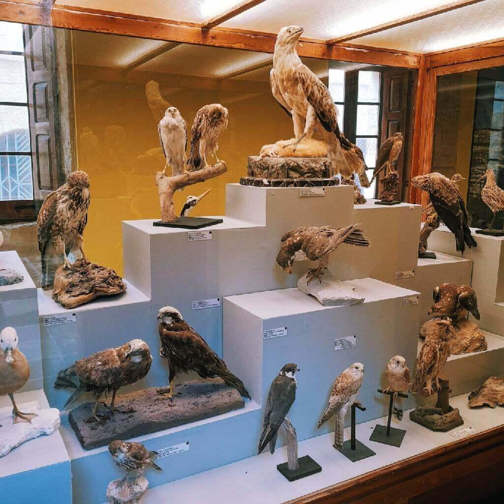 citadella museums